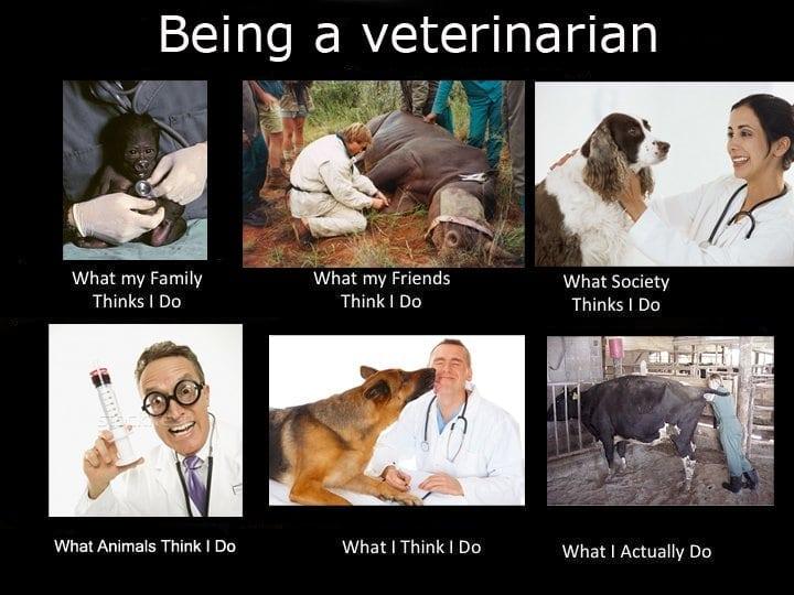 Veterinarian expectations vs reality