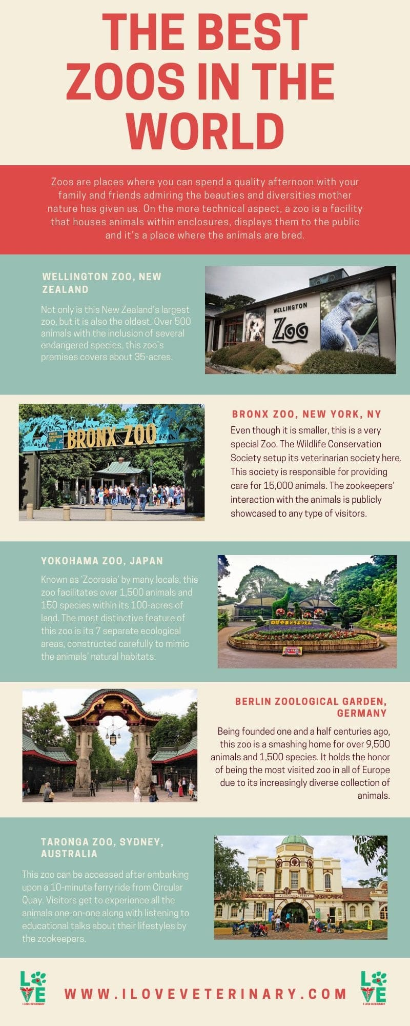 the top 5 zoos in the world I Love Veterinary - Blog for Veterinarians, Vet Techs, Students