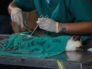Veterinary Medicine in the UK