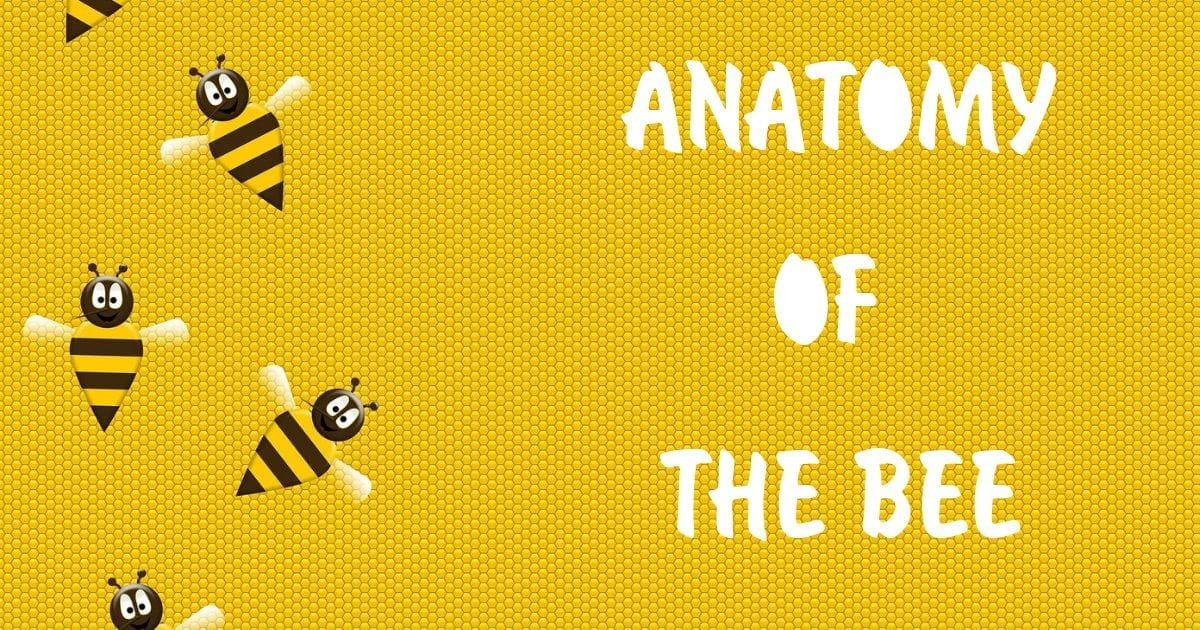 Bee anatomy described with images. I Love veterinary