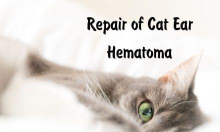 Repair of Cat Ear Hematoma