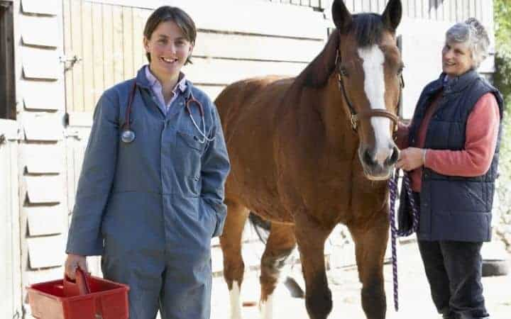 large animal vet with a horse I Love Veterinary