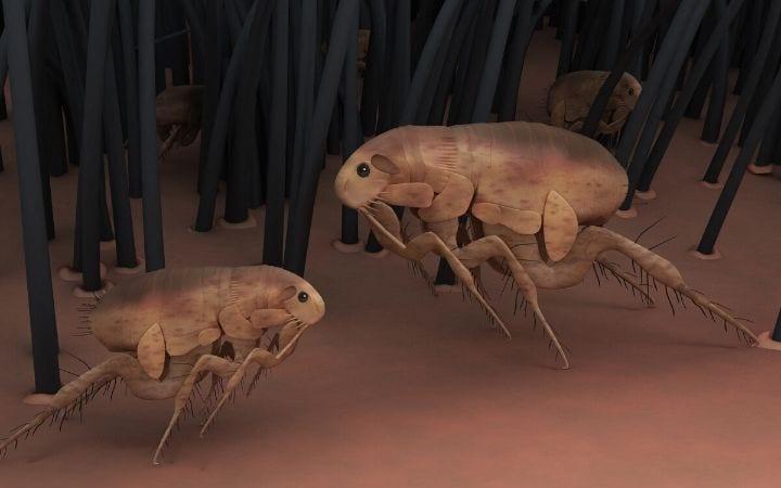 fleas I Love Veterinary
