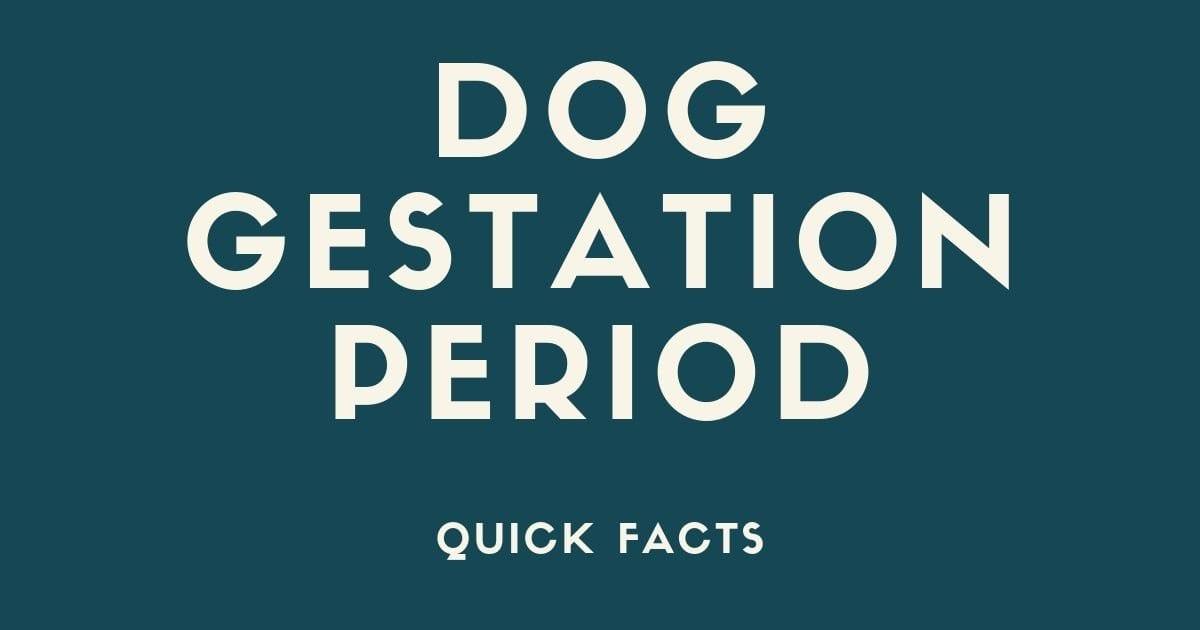 Dog gestation period