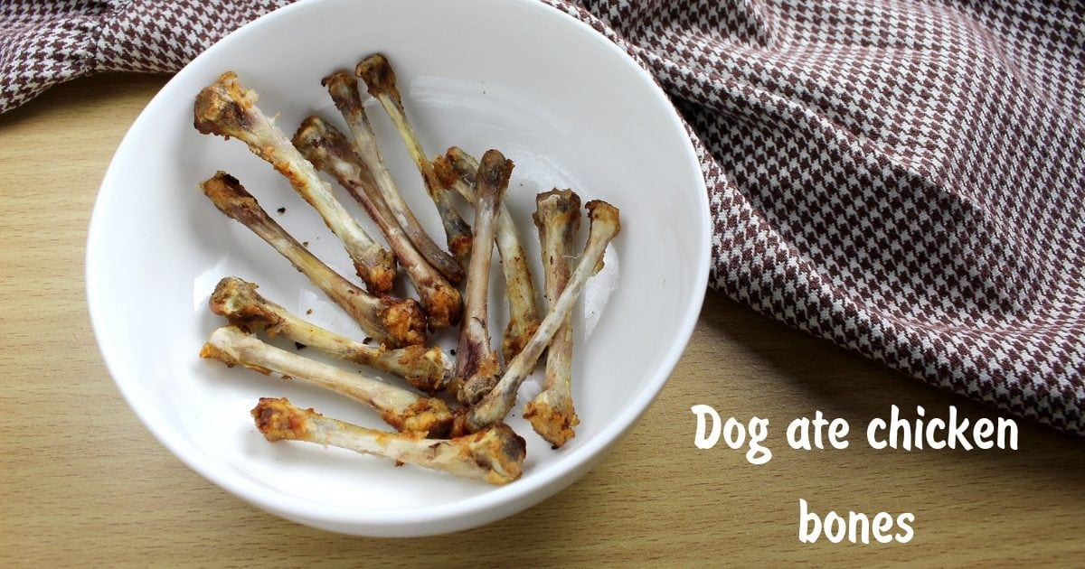 Dog ate chicken bones