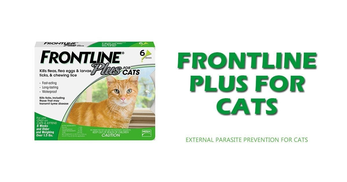external parasite prevention for cats, frontline plus for cats