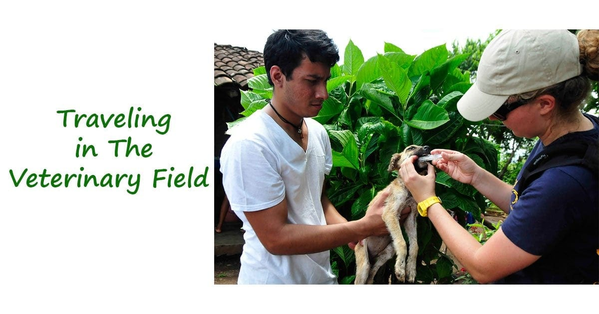 Traveling in the Veterinary Field