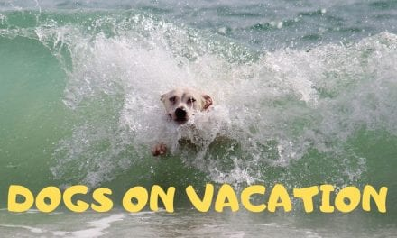 Dogs on vacation
