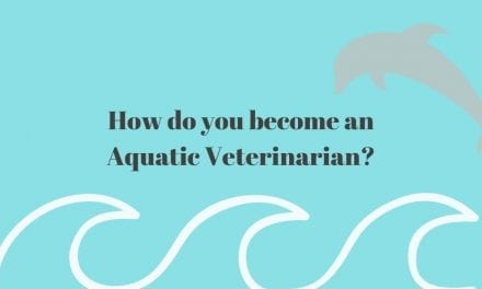 How do you become an Aquatic Veterinarian?