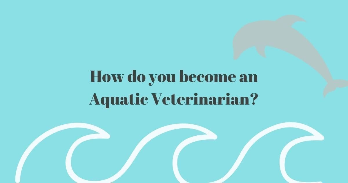 How to become an Aquatic Veterinarian