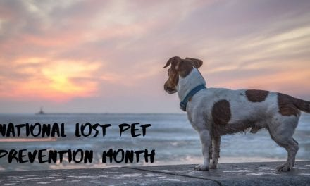 National Lost Pet Prevention Month – July 2019