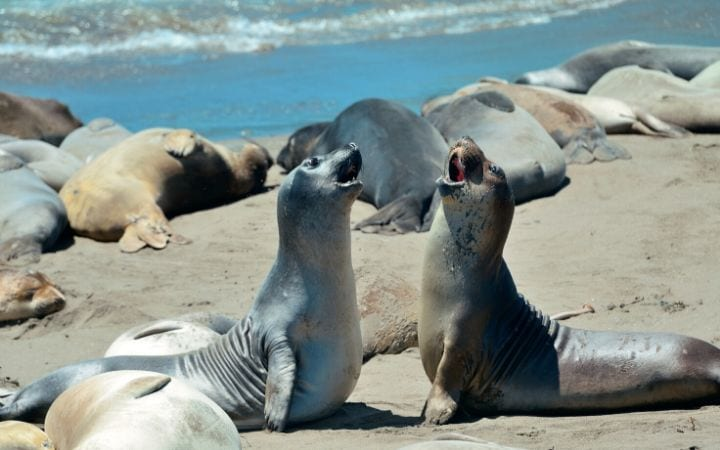 seals on a beach, I Love Veterinary