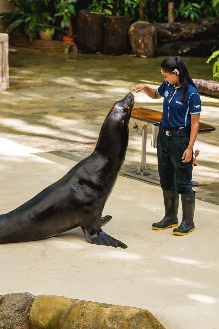 sea lion, I Love Veterinary