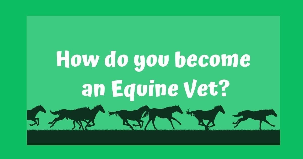 Become an Equine Vet