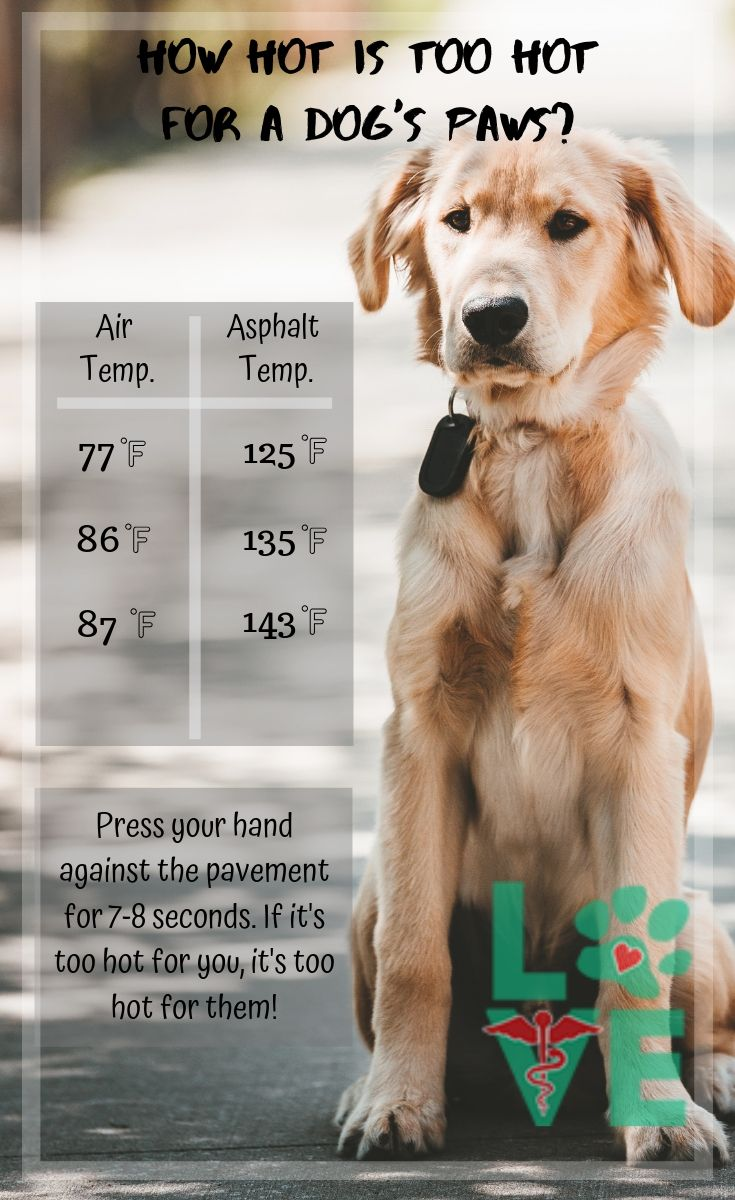 how hot is too hot for dogs