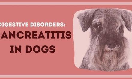 Digestive Disorders: Pancreatitis in Dogs