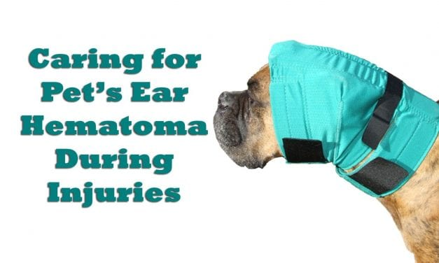 Caring for Pet's Ears During Injuries