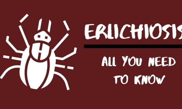 Erlichiosis: All You Need To Know