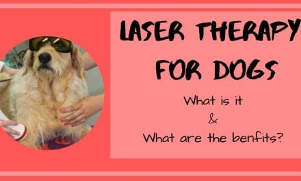What is Laser Therapy for Dogs and What are the Benefits?