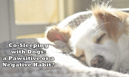 Co-Sleeping with Dogs: a Pawsitive or a Negative Habit?