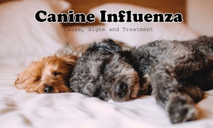 Canine Influenza – Cause, Signs and Treatment