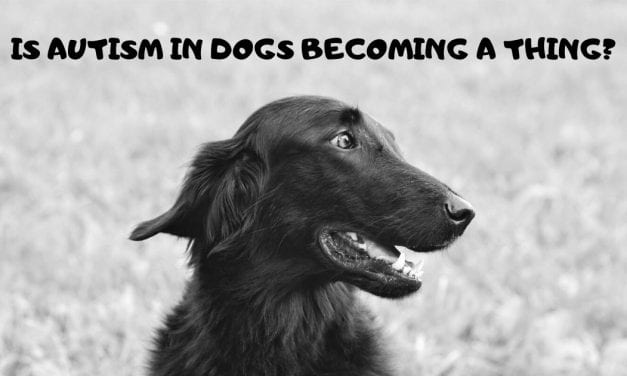 Is autism in dogs becoming a thing?