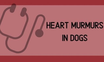 Heart murmurs in dogs – What is it and what are the main causes?