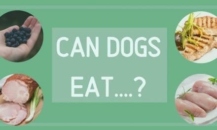 Can dogs eat……?