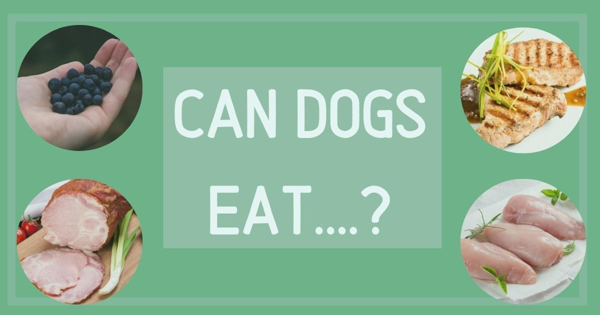 can dogs eat....