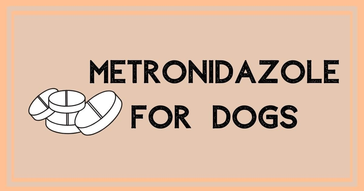 metronidazole for dogs I Love Veterinary