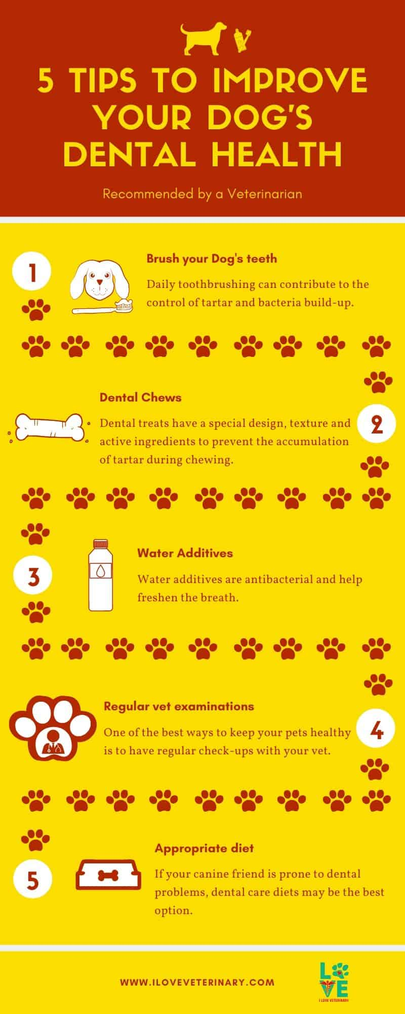 5 Tips to improve your dog's dental health I Love Veterinary