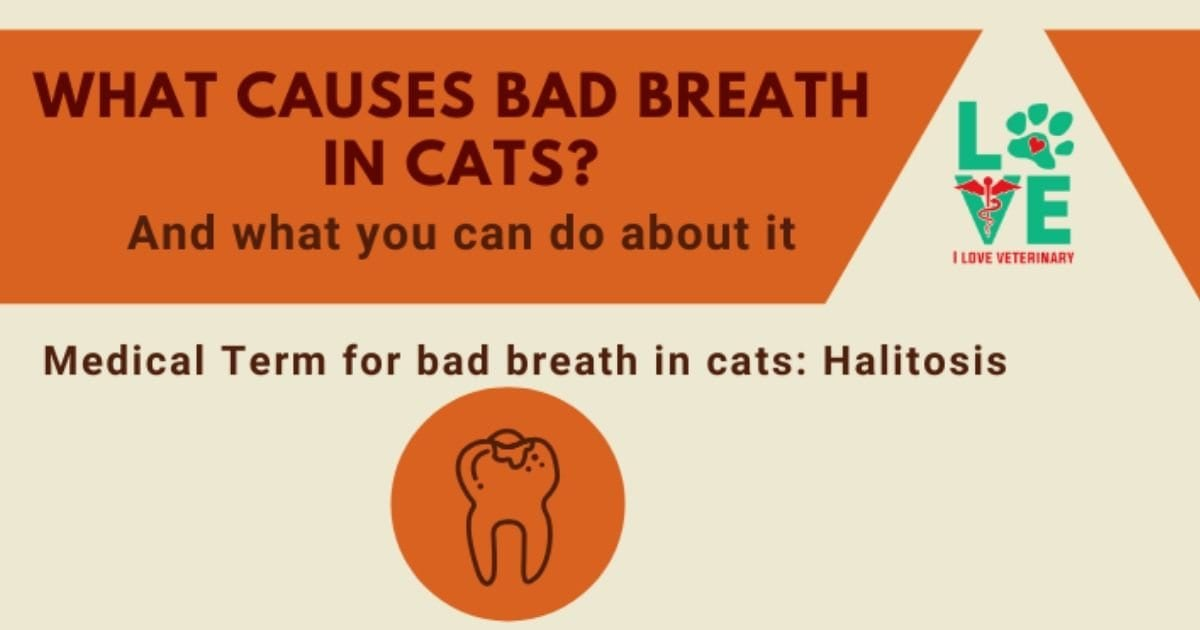 What causes bad breath in cats infographic