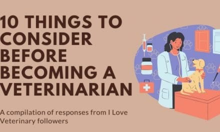 10 Things to Consider Before Becoming a Veterinarian