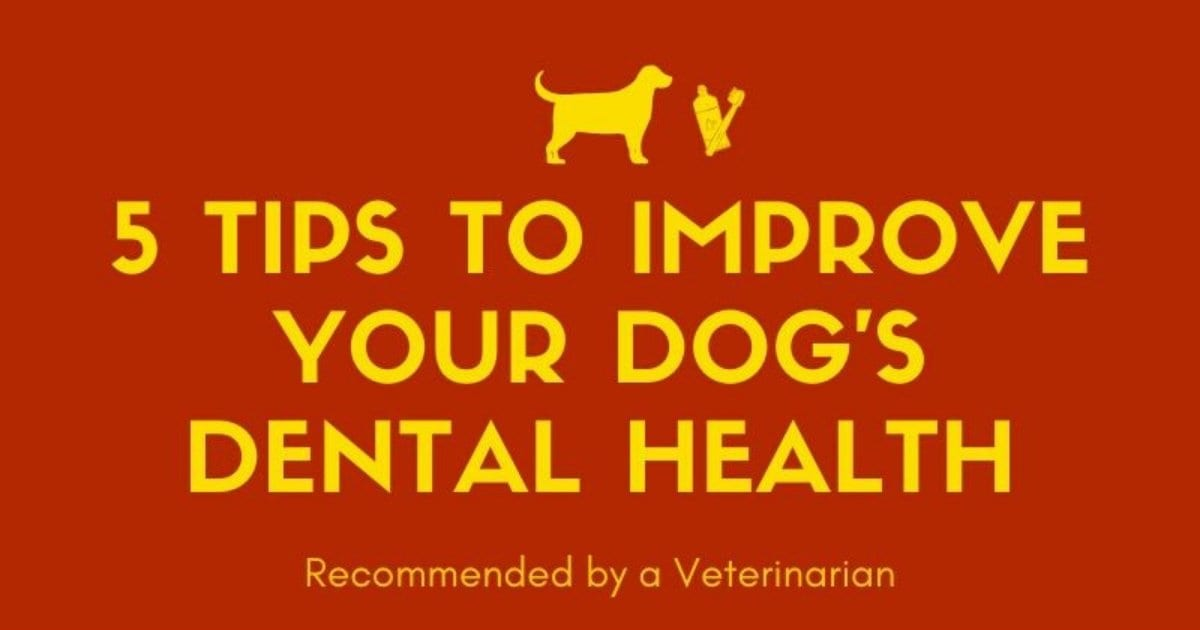 5 Tips to improve your dog's dental health