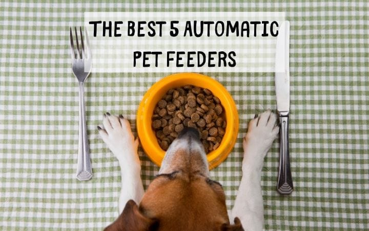 The Best 5 Automatic Pet Feeders I Love Veterinary