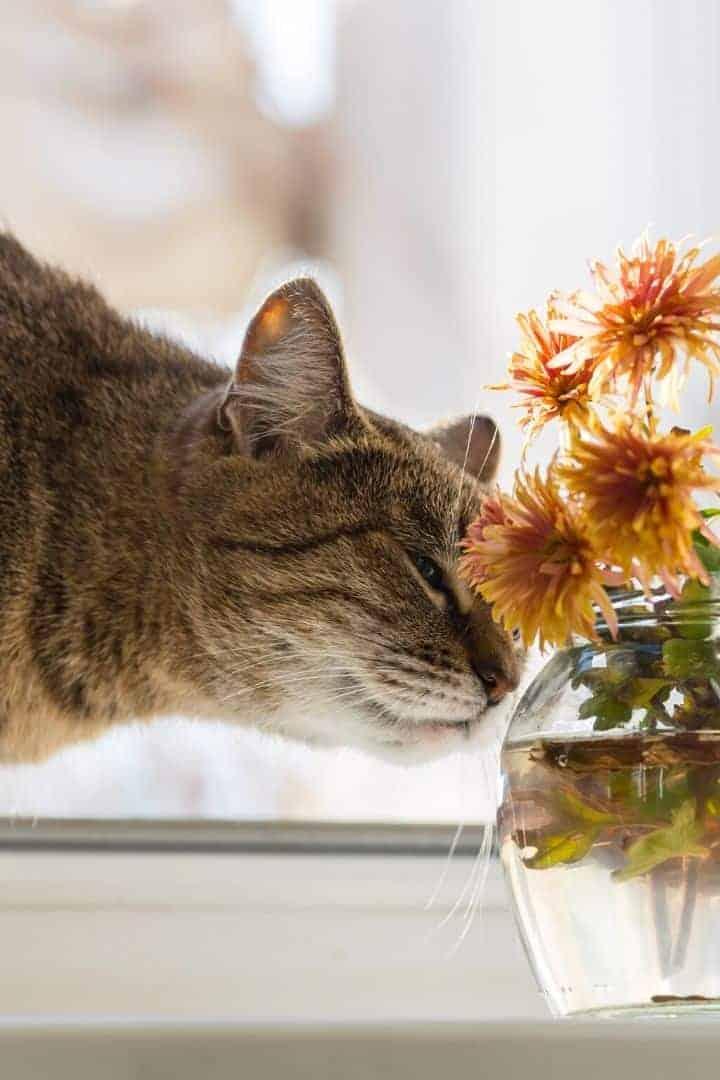 Cat smelling flowers I love veterinary
