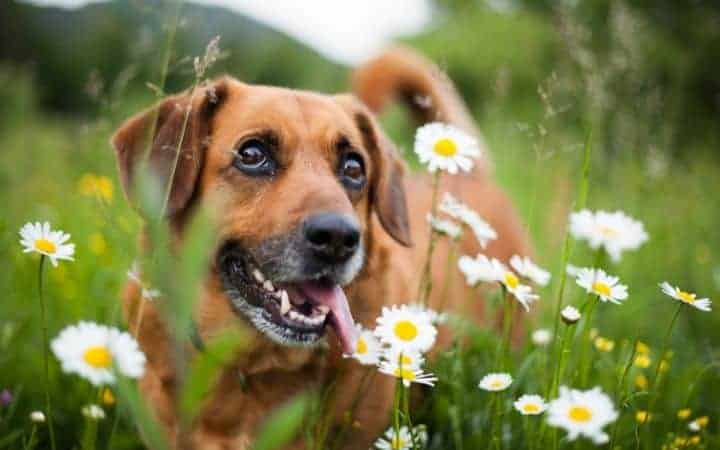 Dog and flowers I love veterinary