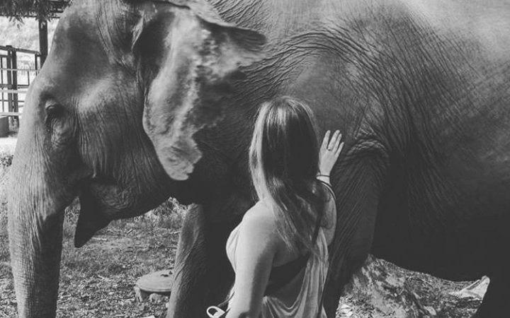 Elephant traveling with veterinarian I love veterinary