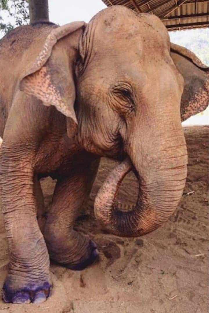 Elephant and Animal Welfare I love veterinary