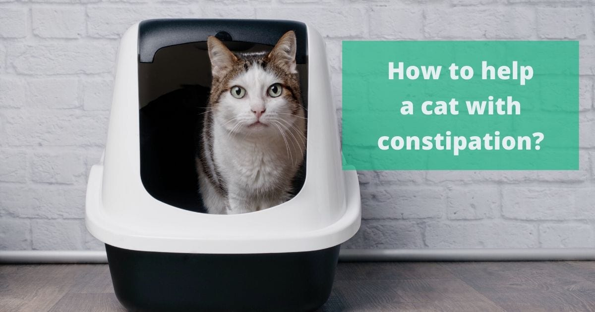 How to help a cat with constipation I love veterinary