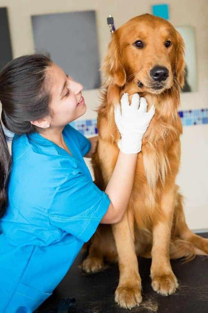 Vet and dog I love veterinary
