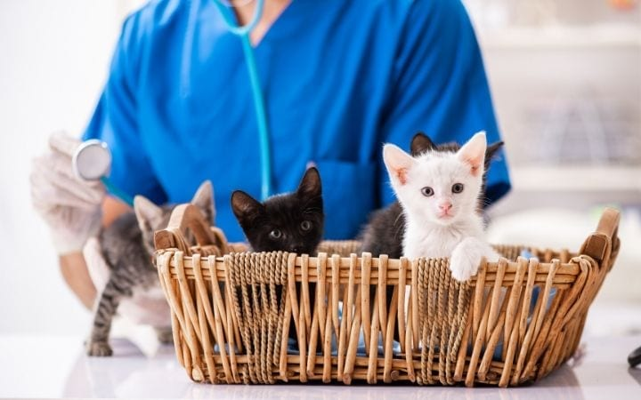 Kittens in the basket at the veterinary clinic | I love veterinary