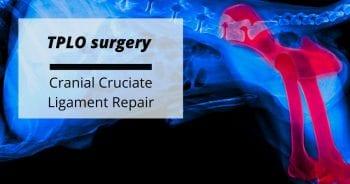 TPLO surgery – Cranial Cruciate Ligament Repair