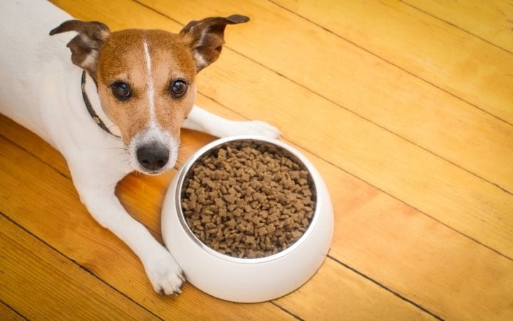 Special diet for dogs with kidney failure - I love veterinary