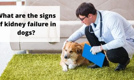What are the signs of kidney failure in dogs?