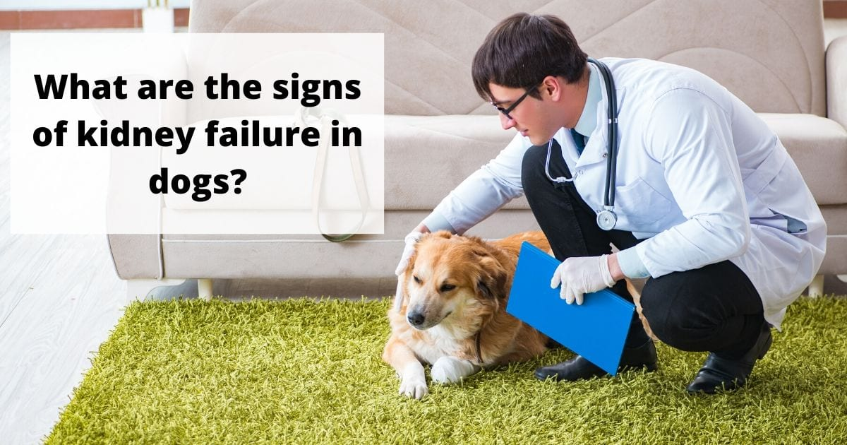 Signs of kidney failure in dogs - I love veterinary