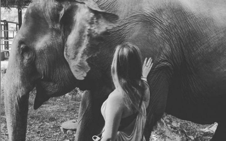 Amanda Kuster and elephant - I Love Veterinary