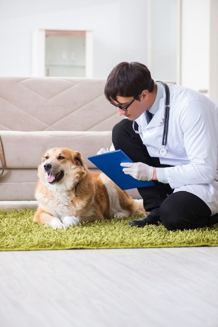 Enalapril dosage for dogs - I Love Veterinary