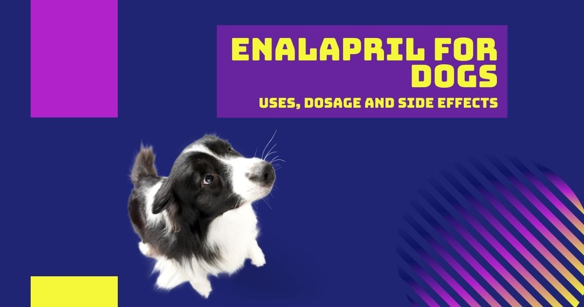 Enalapril for Dogs - I Love Veterinary