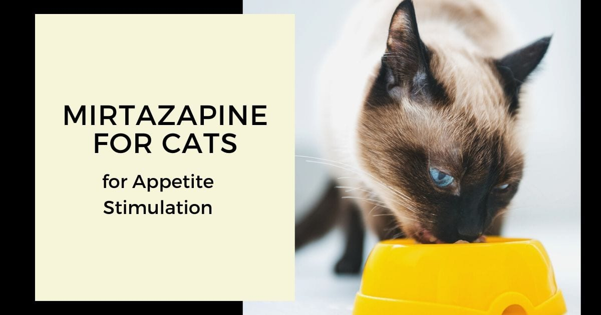 Mirtazapine for Cats – for Appetite Stimulation